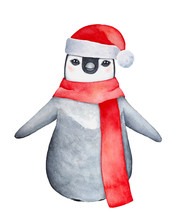 Little Charming Baby Penguin Character Wearing Fluffy Santa Claus Hat And Long Warm Knitted Scarf. Cute Fun Touch For The Winter Holiday. Hand Painted Watercolour Graphic On White Background, Isolate.