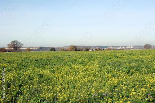 Foto op Canvas Platteland Les champs de fleurs de Richelle