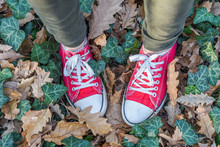 Pair Of Shoes Standing On Forest Ground With Colorful Leaves