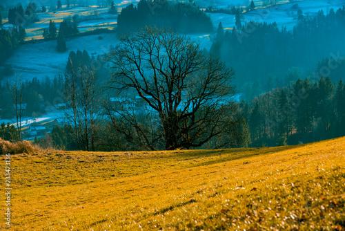 Photo sur Toile Bleu vert Herbsliche Landschaft golden leuchtend mit verschneiten Wiesen und Wälder im Hintergrund und Nebel