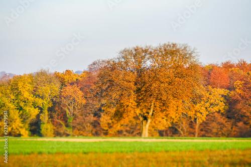 Poster Jaune Baum im Herbst Miniatur