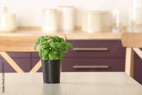 Foto op Canvas Aromatische Pot with fresh green basil on kitchen table. Space for text