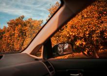 Oranges Through Car Window