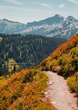 Paradise Pass Mount Rainer
