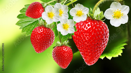 tasty garden strawberries on  dark green nature background
