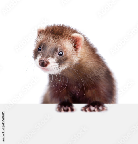 Ferret above white banner. isolated on white background Billede på lærred