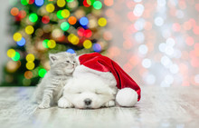 Kitten With Sleepy White Fluffy Samoyed Puppy In Red Santa Hat  On A Background Of The Christmas Tree