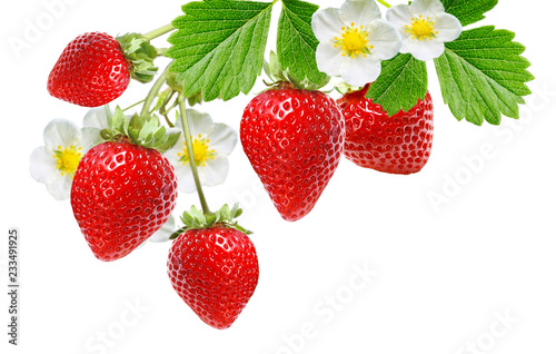 fresh tasty red berries blooming plant garden strawberry