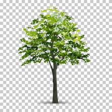 Tree Isolated On Transparent B...