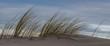 Strandhafer auf einer Sanddüne