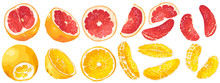 Set With Fruits And Fruit Parts Of Grapefruit And Orange In Vector