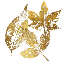 Gold Leaves As Design Element Isolated On White Background. Leaf Print With Gold Acrylic Paint. Holiday Decoration In Style Grunge