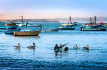 Peruvian Pelicans Feeding In T...
