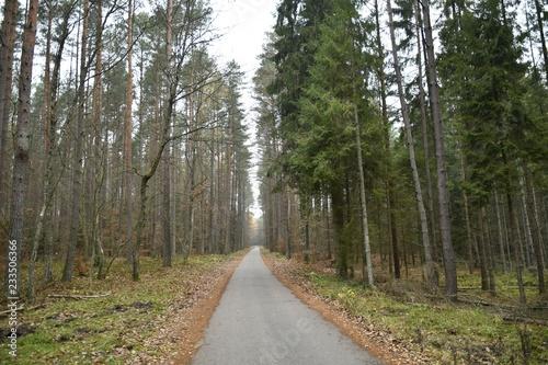 Foto op Plexiglas Weg in bos A bike path in a Kashubian forest