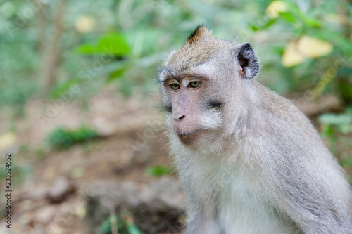 In de dag Aap Monkey in the wild close-up.