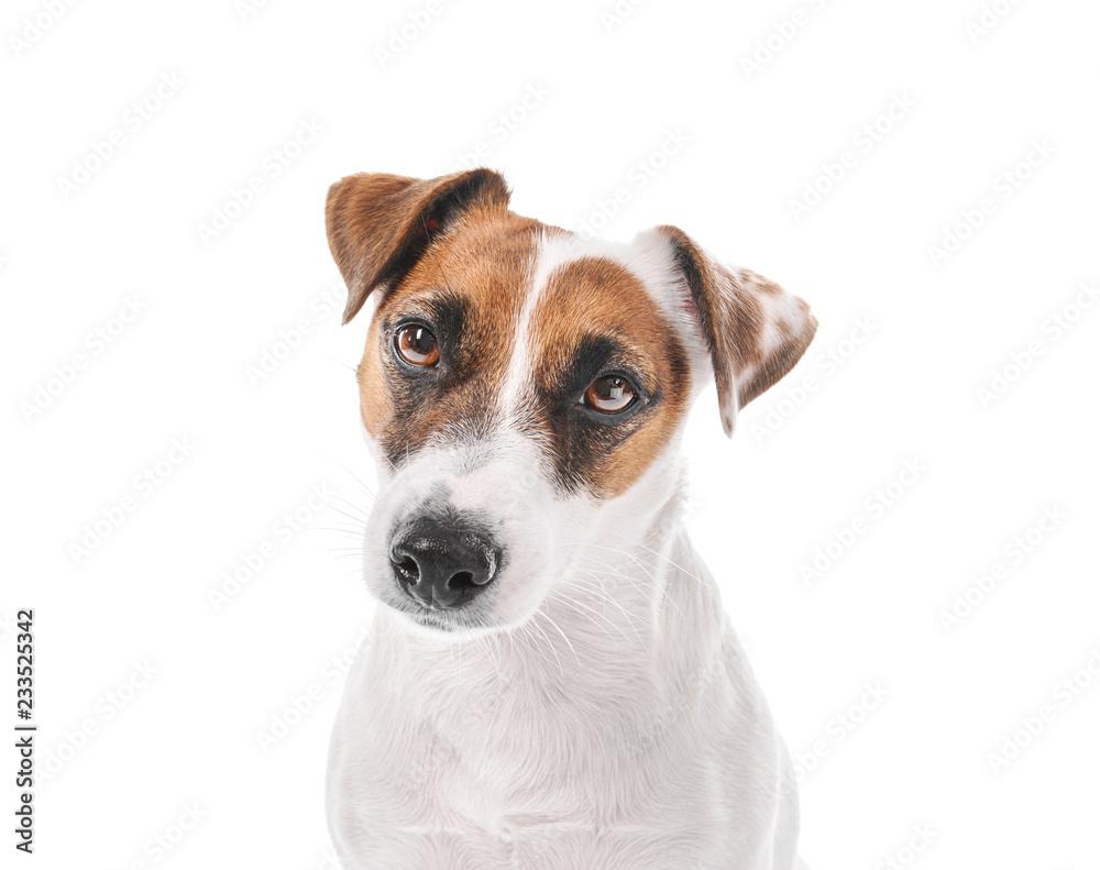 Fototapety, obrazy: Cute funny dog on white background