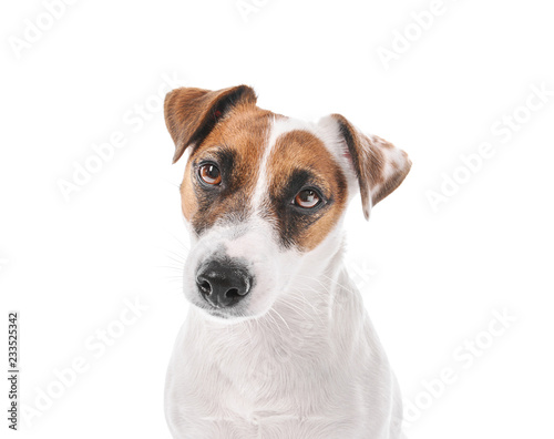 Fotografie, Obraz  Cute funny dog on white background
