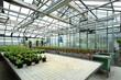 altes Gewächshaus ztur Anzucht von Pflanzen in der Forschung