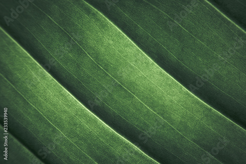 Texture of plant leaves