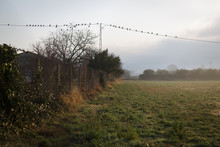 Birds On Electrical Wires In Countryside