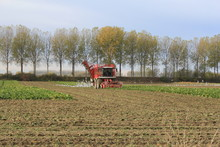 A Large Red Beet Harvester In ...