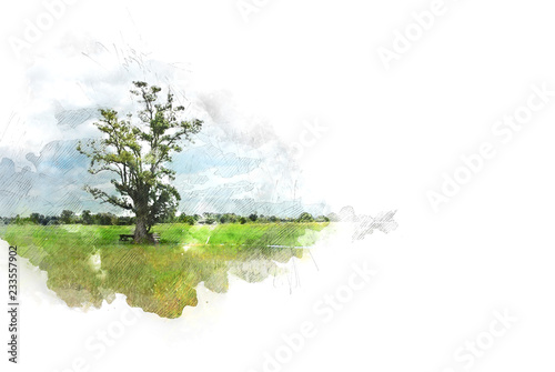 Poster Blanc Abstract tree and field landscape on watercolor illustration painting background.