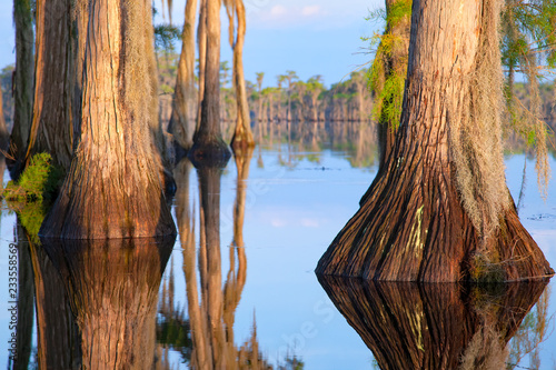 Fotografiet  Cypress Trees, Banks Lake, GA