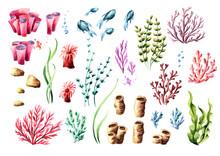 Corals And Aglae Set. Watercol...