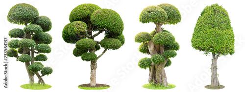 Photo Bonsai trees isolated on white background