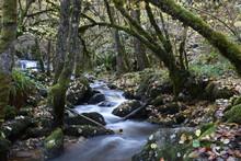 Small Mountain River In Autumn...