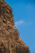 Brown Cliff Rock Formation With Ledge With Seagull Standing On Ledge. Blue Clear Sky In Background