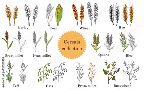 Carta da parati Hand drawn set of culinary agricultural cereals