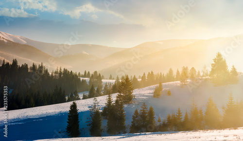cudowna-przyroda-w-gorach-ze-swierkowymi-drzewami-na-zasniezonych-stokach