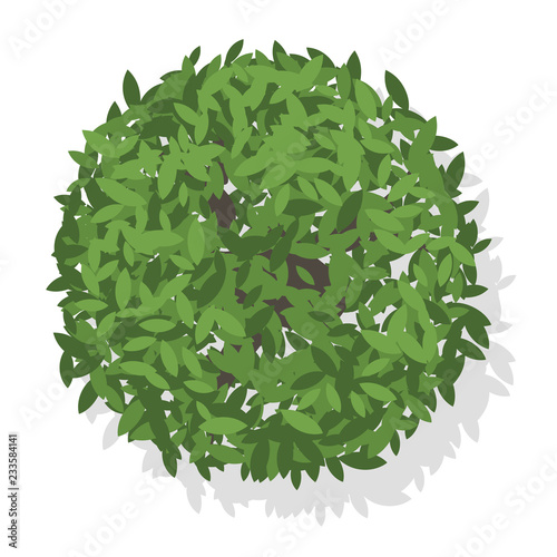 Vector tree top view - Buy this stock vector and explore