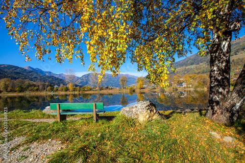 Ein schöner Birkenbaum mit Bankerl am Teich