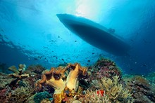 Coral Reef With Different Corals And Silhouette Of Dive Boat, Pacific, Queensland, Australia, Oceania