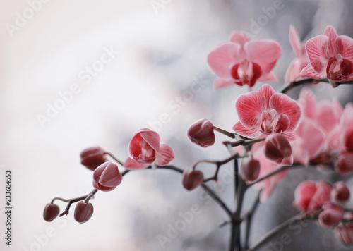 Obraz Kwitnące storczyki - fototapety do salonu