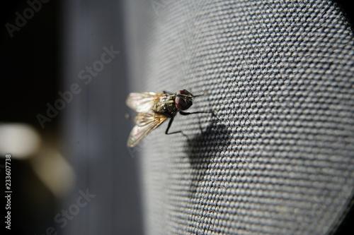 Fotografía  la mosca