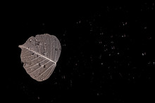 A Silver Leaf On A Black Surface, With Raindrops