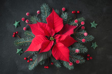 Christmas Star Flower, Or Poinsettia, And Decorated Fir Tree Twigs, Flat Lay On Dark