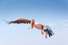Pelican Catching Fish Against Sky