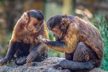 Apes Sharing