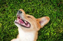 Cropped Image Of Dog On Grassy...