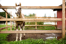 Horse Standing By Fence