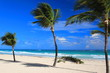 View of lonely palm trees and white sand beach in Punta Cana, Dominican Republic.