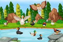 Birds In Lake Scene