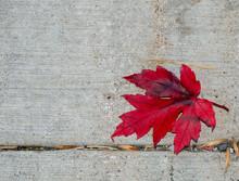 Red Fall Leaf On Sidewalk Room For Text