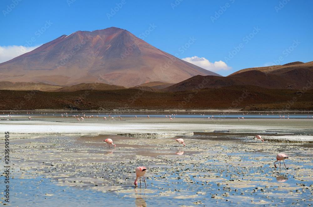 Uncountable Pink Flamingo at Laguna Hedionda, The Saline Lake in Andean Altiplano, Potosi, Bolivia, South America