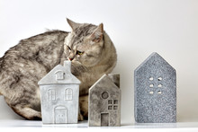 Cute Furry Cat Smelling Stone Toy Houses While Standing On White Background