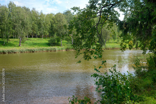 Foto op Aluminium Rivier Wild river in forest. River view through tree branches. Summer river landscape.